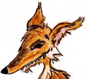 cabeza-coyote-Copy